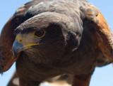 Tucson Birding
