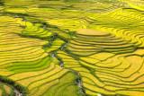 Sapa Rice terrain Vietnam