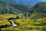 Vietnam Sapa Rice Terrain