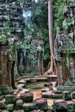 Banyan Tree Ta Prohm Temple Cambodia