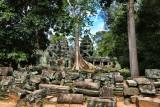 Banyan Tree Ta Prohm Temple Cambodia III