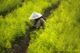 Vietnam Daily Life