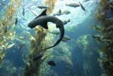 Shark swirl