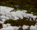 0109 White Slime Mold.JPG