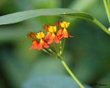 0839 unknown flower.jpg