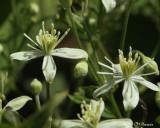 1367 Wildflower sp.jpg