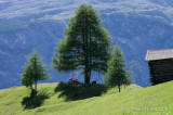 Alto Adige - Südtirol