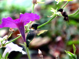Love the Lively Hummingbirds.