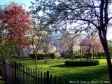 Springtime at Lanier Mansion