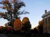 Trees around the Mansion
