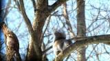 Squirrel and Bird