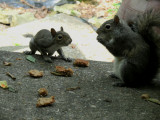 Baby Squirrel and it's Mother.