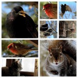 One Day in the Life of a Birdfeeder