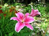 Asiastic Lilies and Day Lilies & Daisies