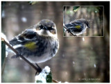 I think this is a Finch!