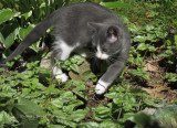 Neighbor's Kitten!