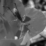 Cute Bug & Knockout Rose
