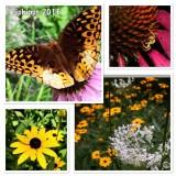 A Day in my Garden