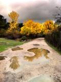 otoño en La Jarosa