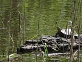 River Park DSC03826.jpg