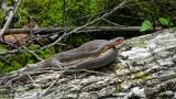 Goose Creek State Park DSC03969.jpg