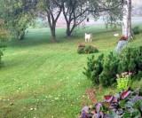 Dog And Fog..