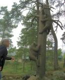 Run Away From Zoo :) ! ?