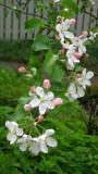 In Full Bloom!