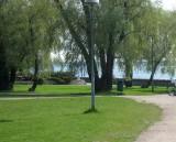 Willows, Kaivopuisto