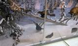 Finnish Fauna