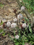 Spring Buds And Grass