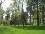 Green Tones Of The Park