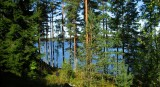 Typical Finnish Forest