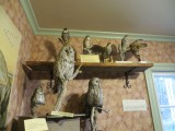 Owls and Hawks
