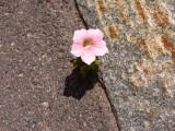 An asphalt flower