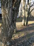 Special bark patterns
