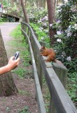 Shooting a squirrel  3...:)