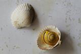 Snail and scallop shell / Sneglehus og muslingeskaller