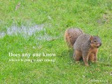 This squirrel want's to know, when will it quit raining