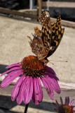 butterfly-1.jpg