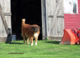Chrissy's Dog
