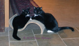 Jimi and Rocky occupying the Catnip Scratch Pad