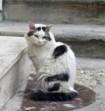 Trevignano Feral Kitty