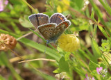 Butterfly in the Olive Grove