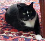 Wilbur, Nancy's Kitty