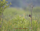 Swamp with Sparrow
