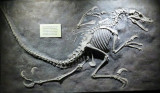 Velociraptor AT THE VINS!