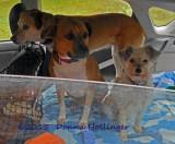 Three Little Dogies