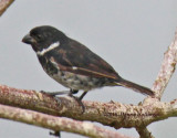 Variable Seed Eater