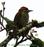 750.8028 Woodpecker.copy.jpg
